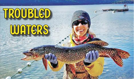 FWP fish culture specialist Tricia Cycz holds a northern pike caught at the Lake Mary Ronan salmon hatchery.