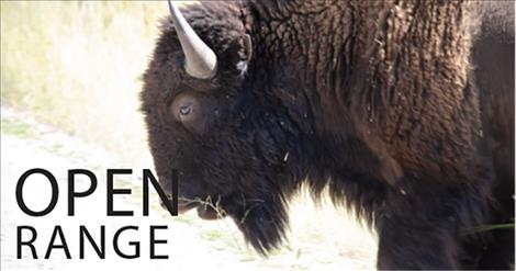 About 300 bison roam  approximately 18,500 acres on the Bison Range.