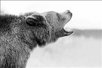 FWP reminds hunters: be bear aware, turn in poachers