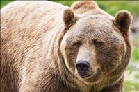 $250,000 grant to continue addressing grizzly-human conflicts