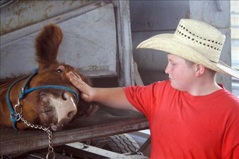 Cody Guenzler comforts his cow Tony while she gets a pedicure.