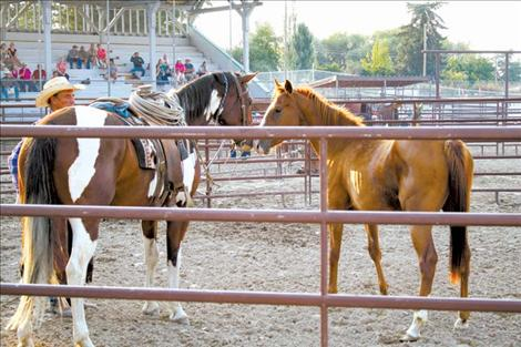Trainers share horse sense in roundpen shootout