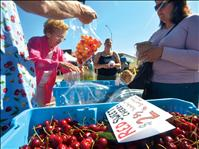 Cherries take center stage at festival