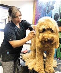 Dog grooming business opens in Polson amid pandemic