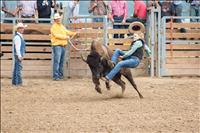 Wild buffalo ride winner holds on for two seconds