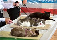 Cats mind manners during fair judging