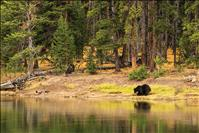 Hunters must expect to see bears