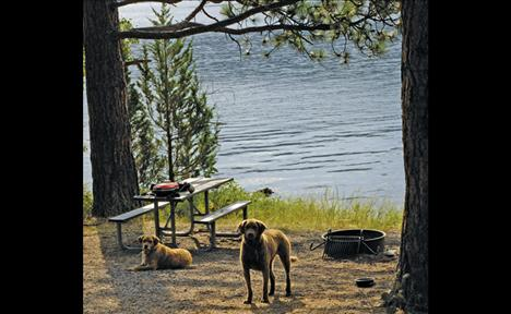 A Big Arm State Park campsite is near the shore of Flathead Lake.